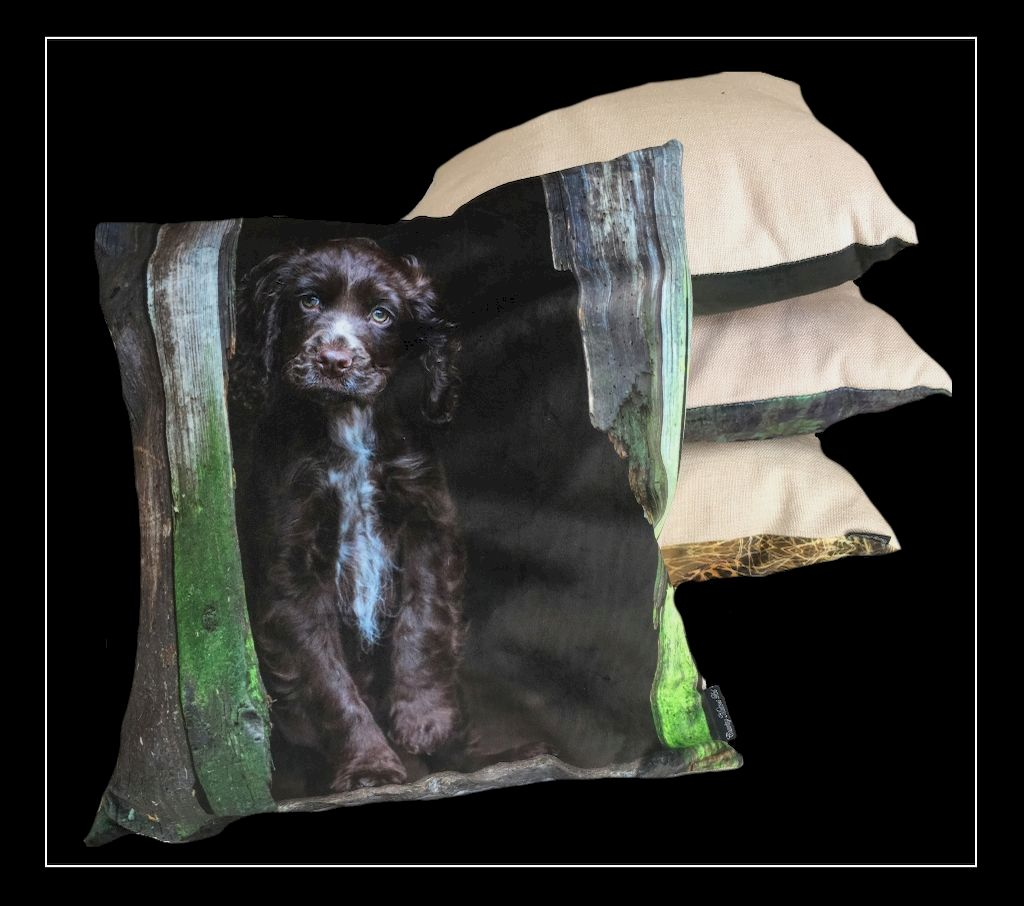 The Home Furnishings Company Coco Choc  Cocker Cushion  45x45cms by Country Matters